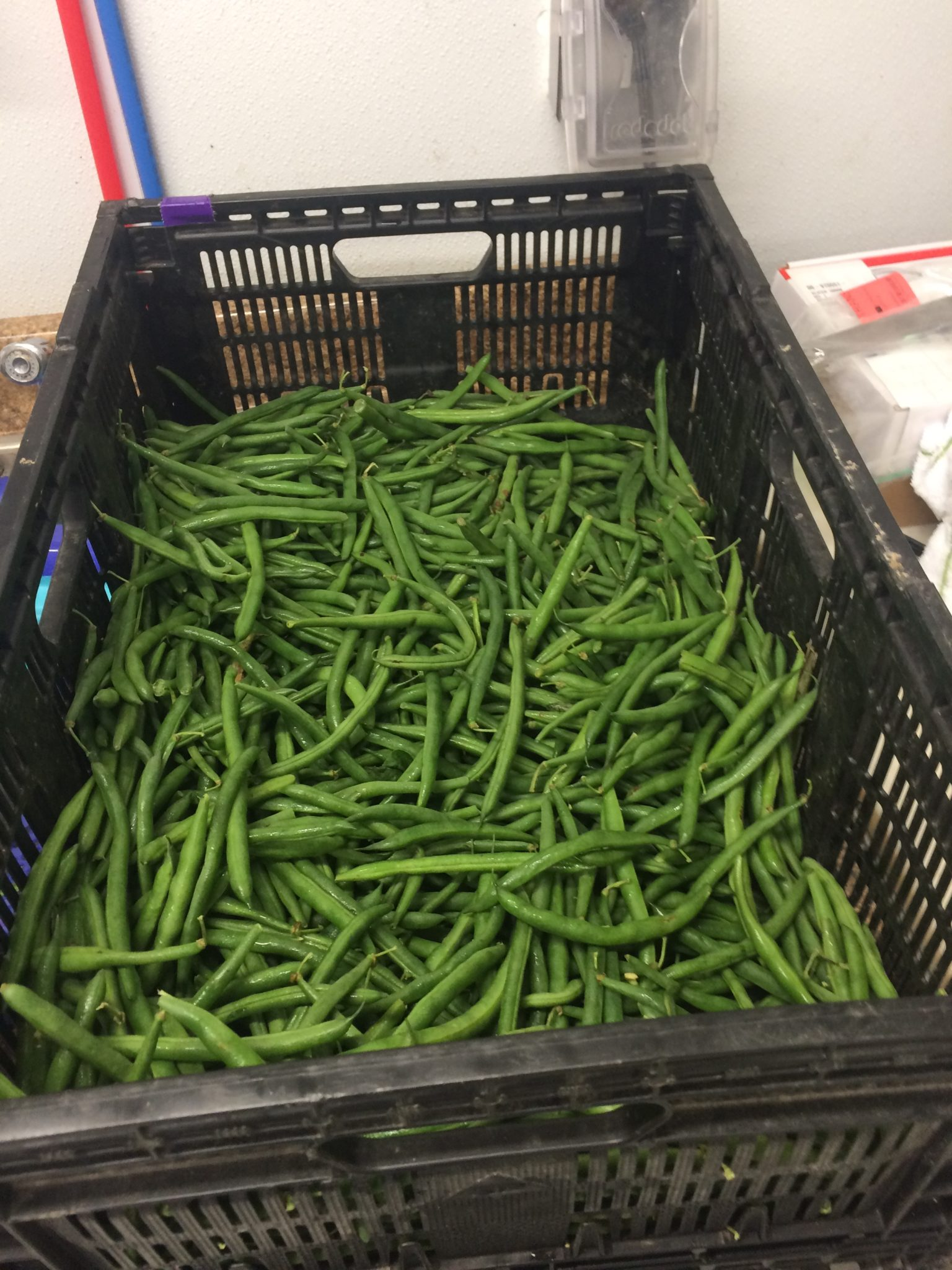 green beans ready to process